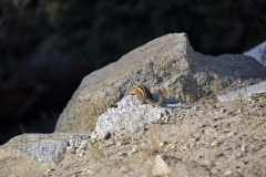 animal-wildlife-photography-chipmunk-4