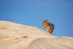 animal-wildlife-photography-chipmunk