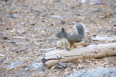animal-wildlife-photography-squirrel-2