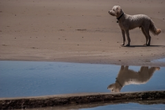 beach-photography-dog-on-the-beach