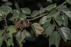 insect-nature-photography-butterfly
