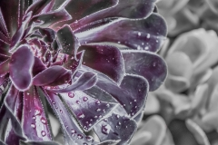 macro-flower-photography-succulent