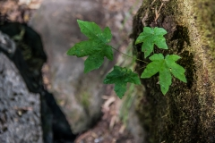 nature-photography-green-tree-leaves