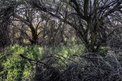 nature-photography-hidden-forest-trees-sunlight