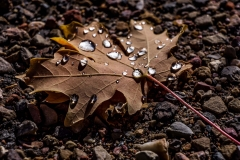 nature-photography-tree-leaves-fall-colors-raindrops