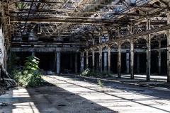urbex-urban-exploration-photography-cleveland-ohio-nature-takes-over